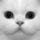 Perzsa macska arca
