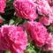 virág 28