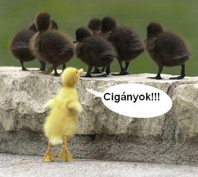 cigányok...:))