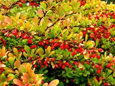 Tasnádi Varga Éva: Itt van az ősz