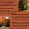 Beszél az ősz