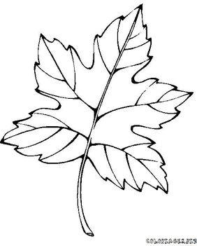 őszi sokaság  8