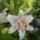 Grófné Ági virágai