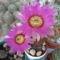 kaktuszaim 1