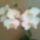 Oné V. Ildikó virágai