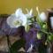 Orchideám.