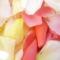 Rózsa  13