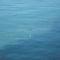 Tirrén-tenger 18 Könnyű a könnyűbúvárnak