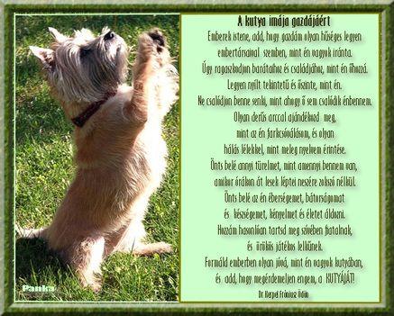 A kutya imája