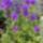 Fehér Erzsébet fehérke37 eladó virágai
