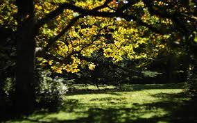Sétány ősszel