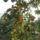 Datolyaszilva_1755691_4024_t