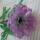 Kőszegi Maca gyöngy virágai