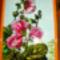 májvarózsa