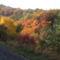 A Bükk ősziképei. 10