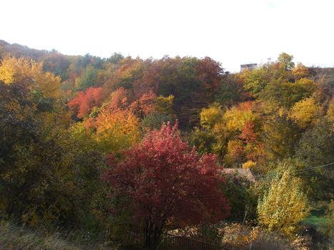 A Bükk ősziképei. 17