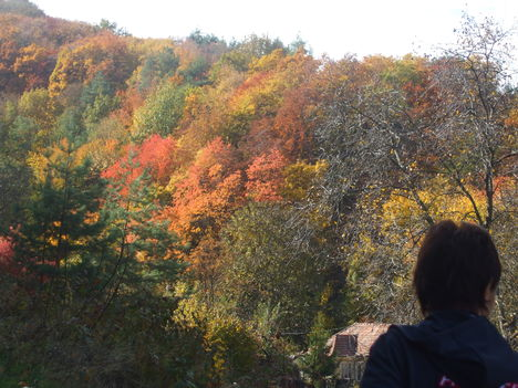 A Bükk ősziképei. 1