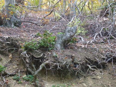 A Bükk ősziképei. 2