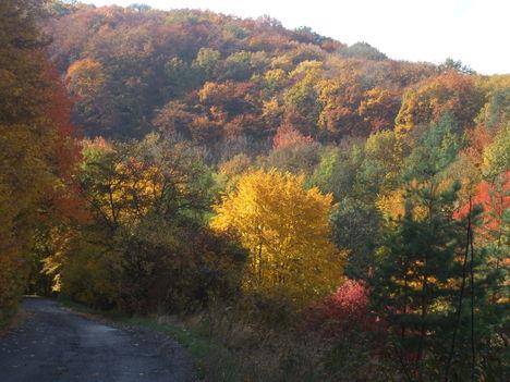 A Bükk ősziképei. 4