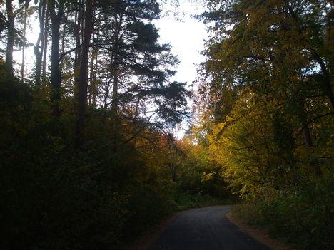 A Bükk ősziképei. 7