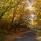 A Bükk ősziképei. 8