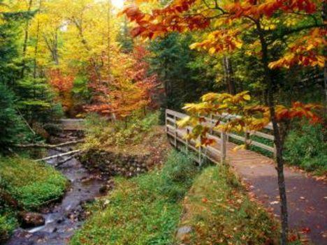 Áprily lajos  Kerget az ősz