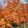 Az őszi Bükk képei.