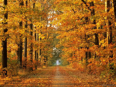 BODA MAGDOLNA  ősz