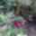 Mitta galériája háztáji ősz Zuglóban