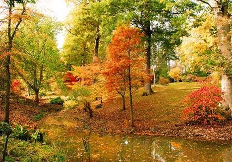 Radnóti Miklós    Istenhegyi kert