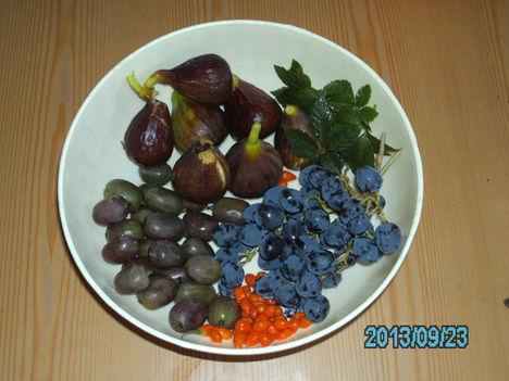 Mai termés, mini kivi, füge, gulan levél teának.Szölő, goji bogyó