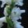 Mester János orchideái