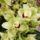 Orchidea_1758594_5748_t