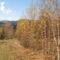 Aranyló ősz!