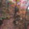 Pilisvörösvár természtvilága ösvény