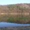 Fák árnyéka a tóban.