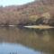 Fák árnyéka a tóban
