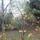 Datolyaszilvafa_i_1763793_8633_t