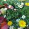 Még nyílnak a kertben az őszi virágok...