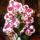QAnnalepkeorchideája és kaktuszai.