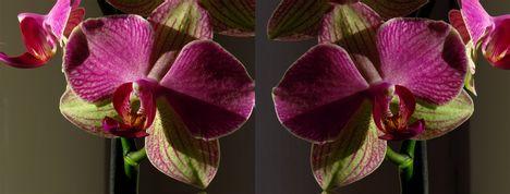 3d orchidea