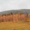 Aranylő ősz