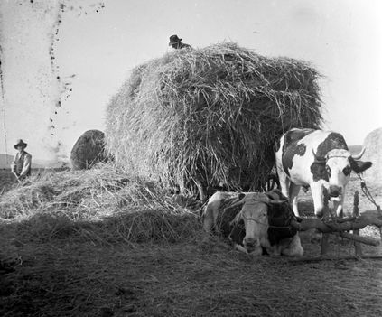Szalmás szekér ökrökkel ,1935.