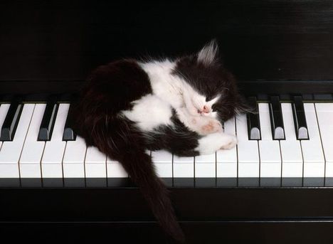 Belefáradtam a gyakorlásba!...