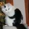 Kilenc cica, akiket a szőrük tett híressé