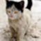 Kilenc cica, akiket a szőrük tett híressé.