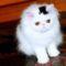 Kilenc cica, akiket a szőrük tett híressé. 1