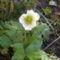 Szellő rózsám.Mai felvétel.X.17.
