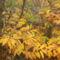 Aranyló ősz.