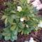 othon virágai 072